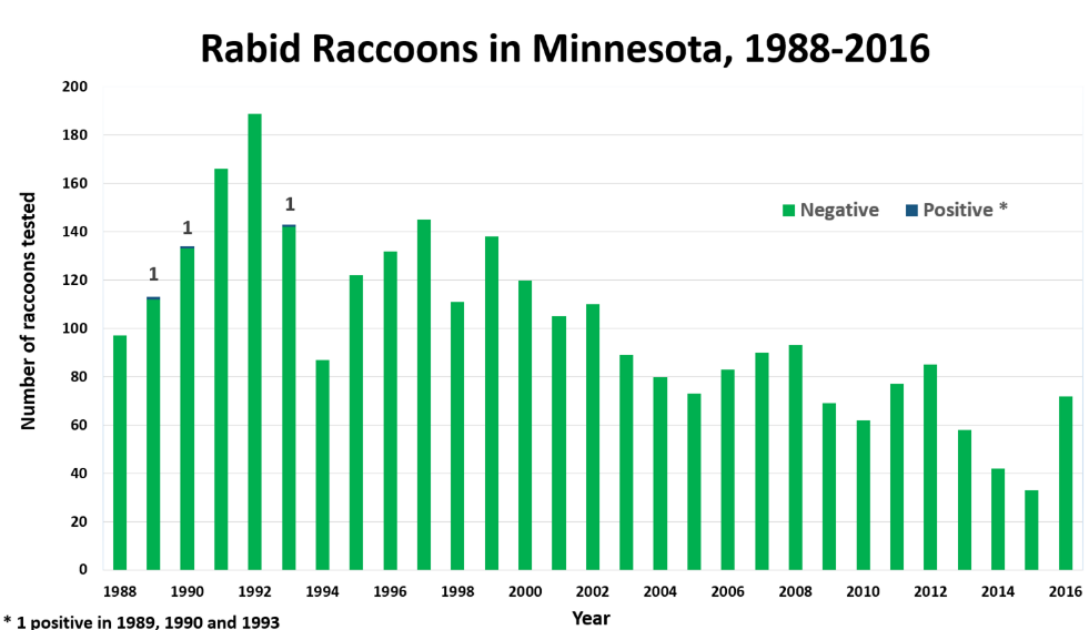 Bar graph of rabid raccoons in Minnesota from 1988 to 2016. Graph shows a trend of declining tests over time.